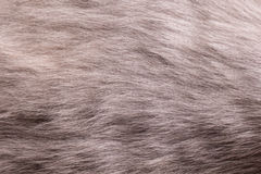 Cat fur close up Royalty Free Stock Photography