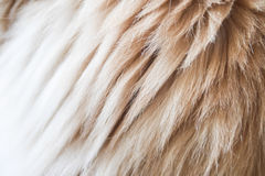 Cat fur close-up Royalty Free Stock Images