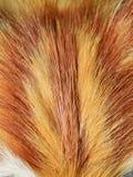 Cat fur Stock Photo