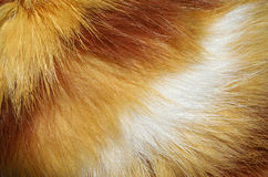 Cat fur Stock Photos