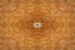 Cat fur kaleidoscope background Stock Photos