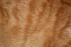 Cat fur Royalty Free Stock Photography