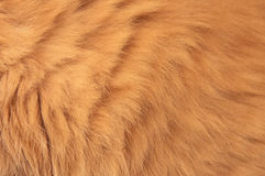 Cat Fur rouge Image libre de droits