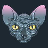 The cat without fur, sphinx with a dark gray color, yellow eyes Royalty Free Stock Image