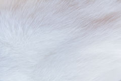 The cat fur-term proximity. As detailed white Royalty Free Stock Image