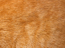Cat fur texture Stock Photography