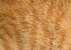 Cat Fur Texture Royalty Free Stock Photography