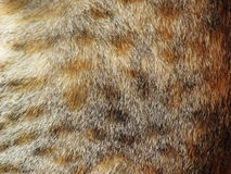 Cat fur texture Stock Images