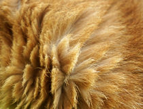 Cat fur. Texture as background Stock Images