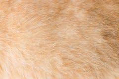 Cat fur texture Stock Photography