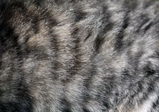 Cat fur texture Royalty Free Stock Images