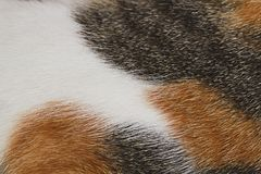 Cat fur texture for pattern and background. It is Cat fur texture for pattern and background stock photos