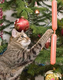Cat and a fur-tree Royalty Free Stock Image