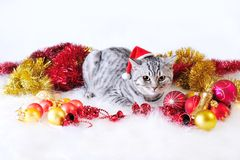 Cat in fur-tree toys Royalty Free Stock Photos