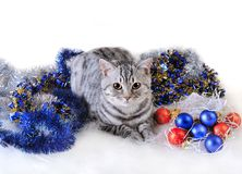 Cat in fur-tree toys Stock Images