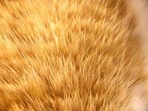 Cat fur (10) Stock Photography