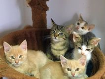 Cat gang. Beautiful colored small cats resting Royalty Free Stock Photo