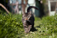 Cat in the garden royalty free stock image