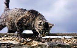Cat in the garden stock image