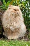 Cat in the Garden Stock Images