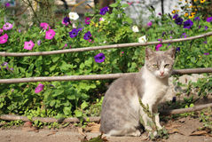 Cat in the garden. Homeless cat in the garden Stock Photos