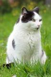 Cat in the garden stock photos