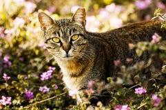 Cat in garden. Alert cat emerging from vegetation Stock Images