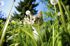 Cat in Garden. Cat smelling the flowers in the garden in the summer Stock Photo
