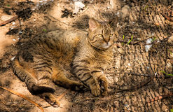 Cat in the garden Royalty Free Stock Photography