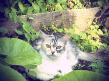 Cat in the garden Royalty Free Stock Photo