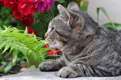 Cat in garden Royalty Free Stock Photo