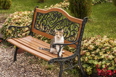 Cat on a garden bench Stock Photos