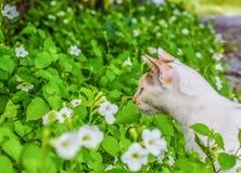 One Cat stock photo