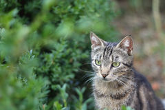 Cat in the garden. Brown tabby cat with big green eyes, in the garden. Selective focus stock image