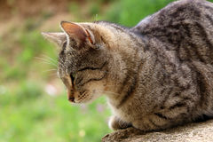 Cat in the garden. Brown tabby cat lying in the garden. Natural light, selective focus stock image