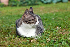 cat in the garden with closed eyes Stock Photography
