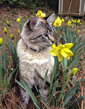 Cat in a Garden Stock Photo