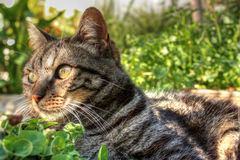 CAT IN THE GARDEN Stock Photography
