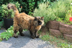 Cat in garden Stock Photography