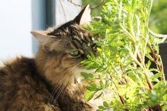 Cat in garden Royalty Free Stock Photo