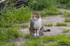 Cat in the garden. garden guard. royalty free stock image