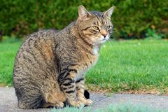 Cat on the garden Royalty Free Stock Photo