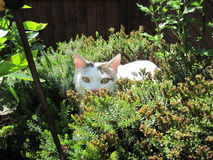 Cat in the garden. Cat hiding in the garden Stock Photography