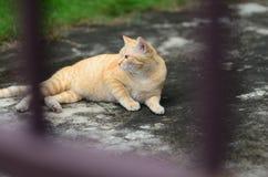 Cat Into The Garden Home Park at Bangkok Thailand stock photography