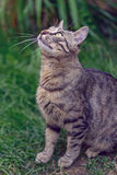 Cat in garden looking up. Cat in green garden looking up Royalty Free Stock Photo
