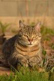 Cat in the garden. Cat lying in the garden Stock Image