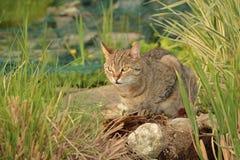Cat in the garden. Cat lying in the rock garden Stock Photos