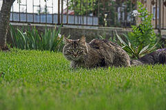 Cat in the garden. Stock Photo