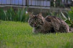 Cat in the garden. Stock Photos