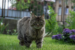 Cat in the garden. Royalty Free Stock Photo